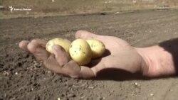 Горы Кавказа – рай для картофеля
