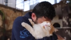 Кошки гибнут под обстрелами в Сирии