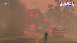 П'ять мільйонів гектарів згорілих лісів, 500 мільйонів загиблих тварин – в Австралії не вщухають лісові пожежі (відео)