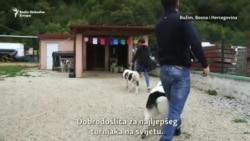 Sevdah iz BiH najljepši pas tornjak na svijetu