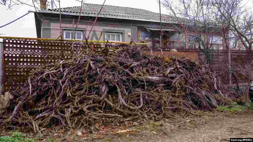 Викорчувана виноградна лоза, ймовірно, піде на дрова
