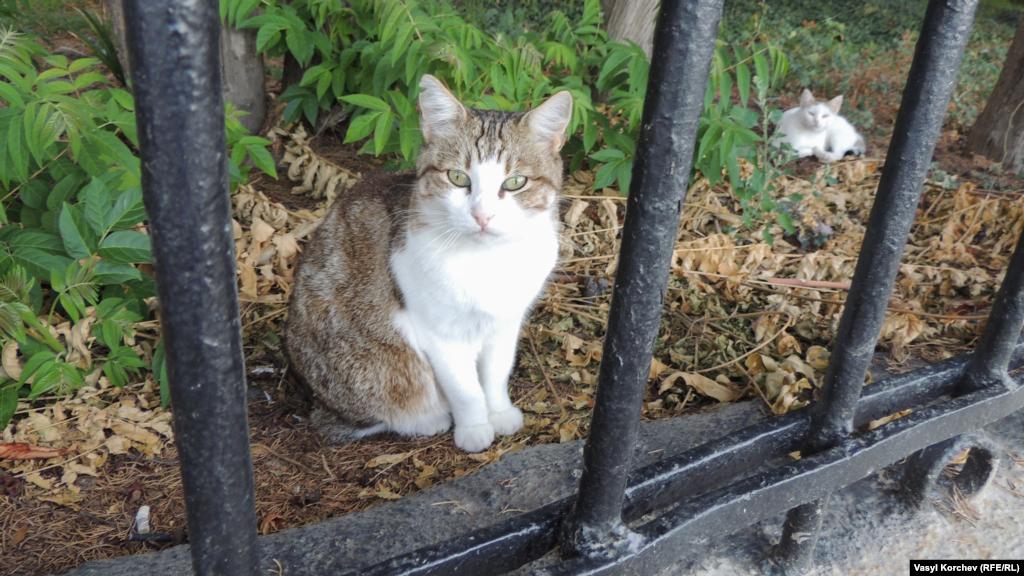 Котів у Гурзуфі багато, їх тут люблять, тому тварини не бояться перехожих, спокійно позують на фотокамеру