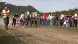 Drvosječe i njihovi konji