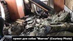 """Последствия взрыва в собачьем приюте """"Маячок"""""""