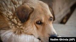 Ultima infecției de rabie la om în România a fost în 2008, când o femeie a murit într-o zonă rurală după ce a contactat virusul din mușcătura de vulpe.