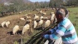 Rijetki grabežljivci napadaju stada u Podrinju