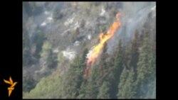 В Кыргызстане сгорело 20 гектаров леса
