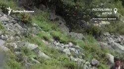 Алтайским браконьерам нашли работу в национальном парке