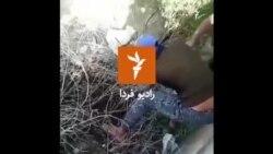 نجات بچه گرازها توسط پرسنل حفاظت از محیط زیست میناب، استان هرمزگان