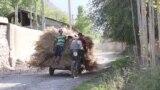 Как решать конфликт в анклаве Сох на границе Узбекистана и Кыргызстана