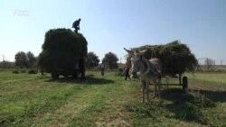 Qara günə qalan Qaragüney