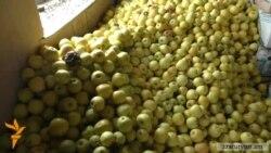 Քարագլուխ գյուղում «տոննաներով խնձորը փտում է»