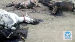 تیراندازی به اسبهای کولبران و کاسبکاران در مرز ایران و کردستان عراق