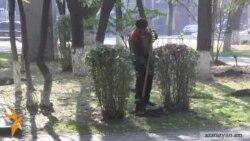 Քաղաքային ծառատունկն ու ծառ չդարձած հազարավոր տնկիները