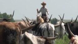 Жизнь на ранчо в американской глубинке