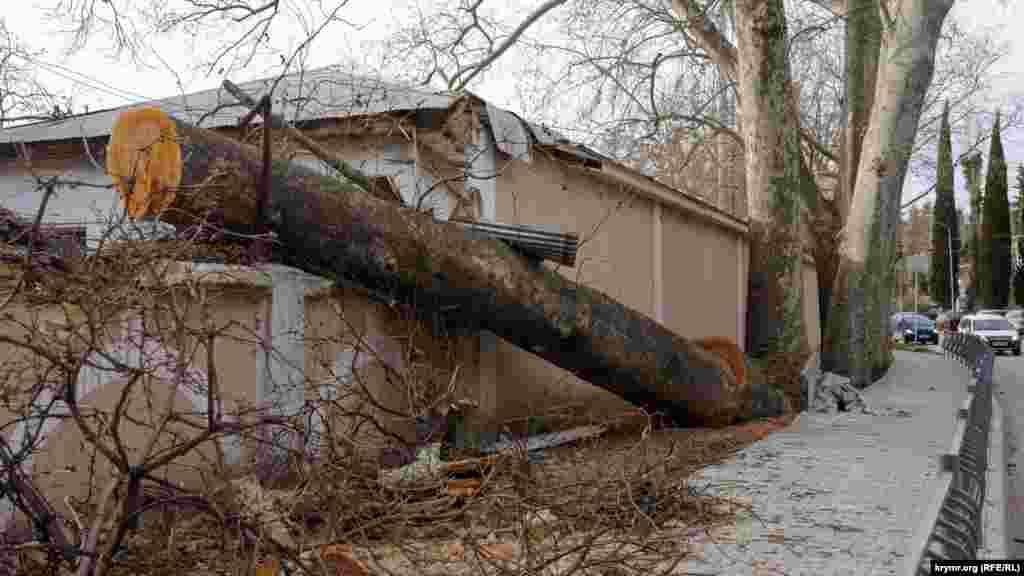 Нет спасения деревьям в городе и от сильного штормового ветра. Накануне именно такой повалил на крышу здания и забор базы отдыха «Старый замок» массивный многолетний платан