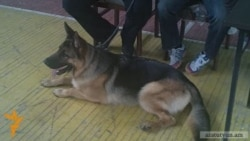 Մոտ 40 ցեղատեսակի շուն՝ շների ցուցահանդեսում