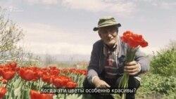 Тюльпаны дедушки Како