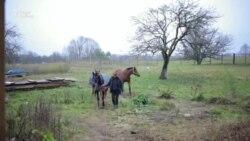 Дзе дажываюць свой век коні, сьпісаныя з цырку і вялікага спорту