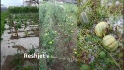 Dëmet nga reshjet në tokat bujqësore