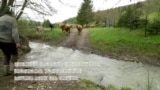 """ვინ მოკლა """"არტური"""" და დათვებთან ბრძოლა რუმინეთში"""