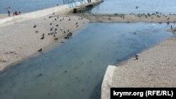 Пляжная текучка в Феодосии