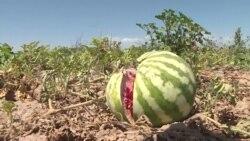 Жара оставила Таджикистан без арбузов