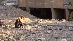 Dozens Of Civilians Evacuated From Raqqa