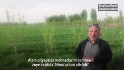 30 одамга иш берган чорвадор фермерни ҳокимият синдирди