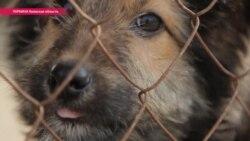 Как прокормить бездомных собак в войну и кризис