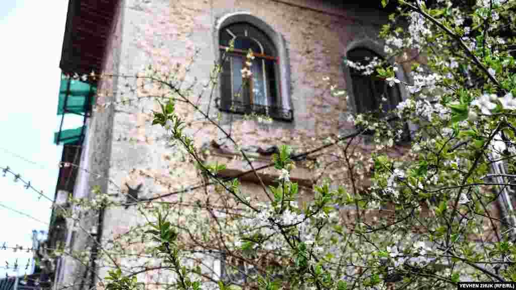 Біля будинку квітнуть дерева