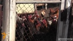 Տուգանք՝ «ապօրինի» հավ պահելու համար