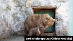 Медведица Глафира с медвежонком в зооуголке Детского парка Симферополя