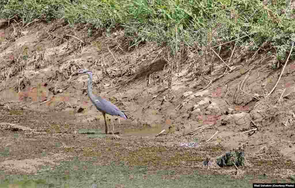 Суу сактагычтардын аймагы канаттуулардын көптөгөн түрлөрү байырлаган жер. Жазында учуп келген канаттуулар ушул аймактарга уя салып, кышында кайра учуп кетишет. Суунун тартыштыгынын айынан табият кандай жабыр тартканын, анын масштабын азырынча бир дагы адис айта албайт.