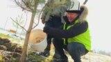 Алайдын уул-кыздары Бишкекке бак тигишти