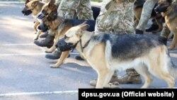 Зараз собаки та кінологи готуються на базі Кінологічного навчального центру ДПСУ у Великих Мостах на Львівщині