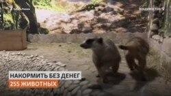 Жители Владивостока подкармливают животных в закрытом из-за коронавируса зоопарке