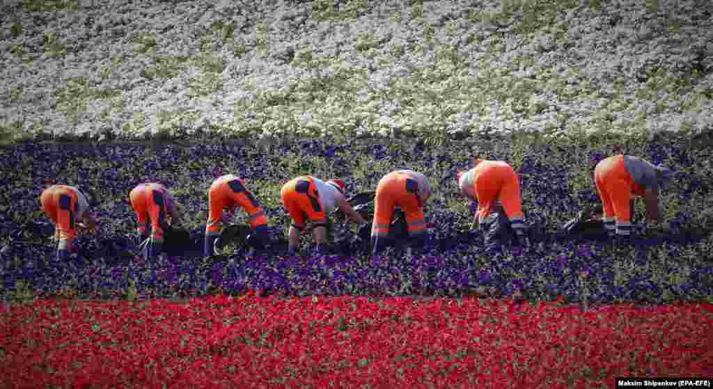 Gardeners work to plant flowers in the colors of the Russian flag on Moscow's Poklonnaya Hill.