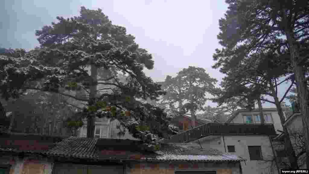 На верхушках сосен – остатки мокрого снега, который от малейшего дуновения ветра тяжелыми хлопьями сваливается на крыши жилищ и лесную подстилку