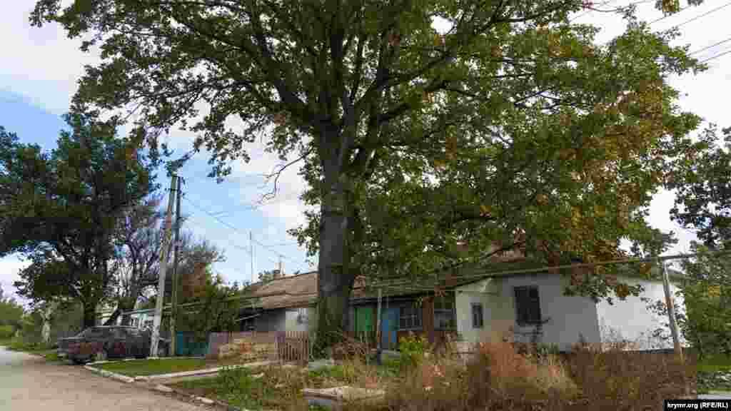 Под высоким деревом на улице Береговой