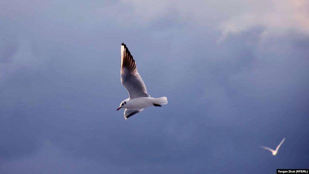Чайки шторму не бояться