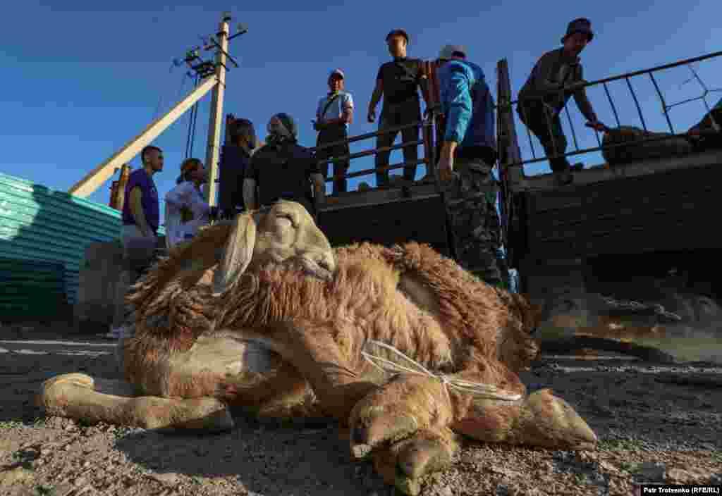 Блокпосты на въезде в Алматы журналистам заметить не удалось, но сразу за городом развернулся стихийный животноводческий рынок— прямо у дороги, с тракторных прицепов, торговали скотом. Резали баранов сразу за стихийным рынком
