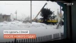 Чиновники вернули ёлку, которую незаконно срубили на участке местного жителя