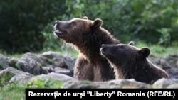 Румънското правителство не е сигурно колко точно е броят на мечките.