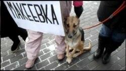 Мітинг у Донецьку на захист безпритульних тварин