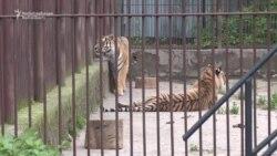Споры вокруг зоопарка Алматы