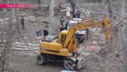 В Ташкенте вырубают чинары: на их место сажают неприспособленные к жаре елочки
