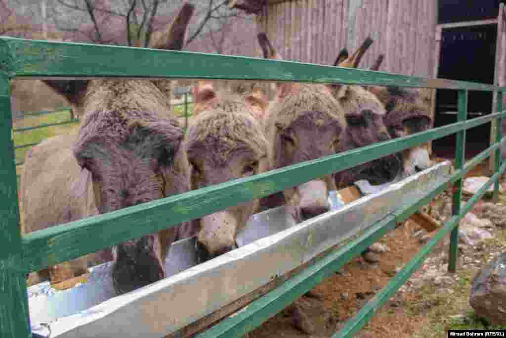 Uz pomoć UN-ovog programa za razvoj (UNDP), Eko centar Blagaj pokrenuo je i program zaštite hercegovačkog magarca, s ciljem očuvanja te autohtone vrste, čiji su primjerci do prije nekih 100 godina bili uobičajena pojava u Hercegovini, a danas se ta vrsta nalazi pred izumiranjem.