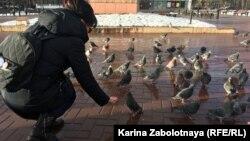 Акция #кормимголубей в Сыктывкаре