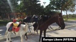 Tiraspol - S-a redeschis parcul de distracții